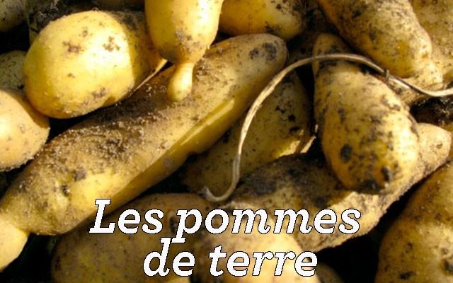 Je cuisine mon potager un site pour mieux connaitre les - Cuisiner les pommes de terre de noirmoutier ...