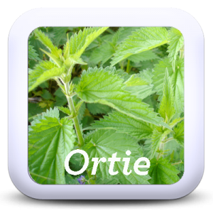 Icon-Ortie