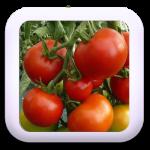 Icon-02-Tomate