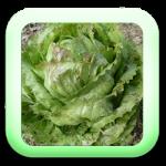 Icon-05-Salade