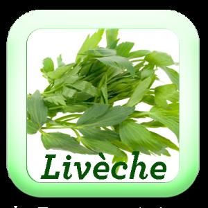Icon-Liveche