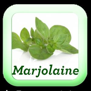 Icon-Marjolaine