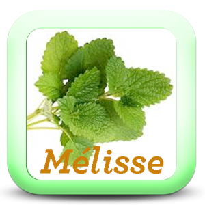 Icon-Melisse
