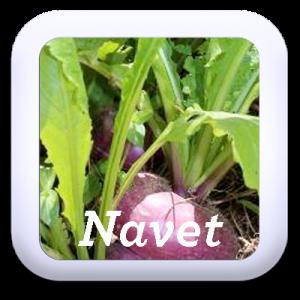 Icon-Navet