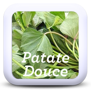 Icon-PatateDouce