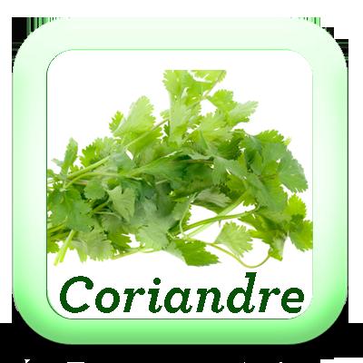 Icon coriandre je cuisine mon potager for Plat cuisine bon pour la sante