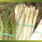 Les asperges vertes, blanches ou violettes …