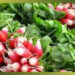 Croquez les radis et cuisiner ses fanes !