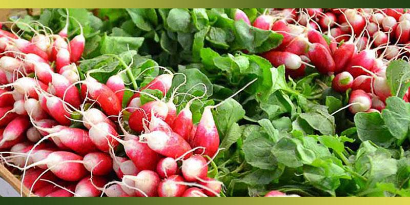 Croquez les radis et cuisiner ses fanes je cuisine mon - Cuisiner les radis roses ...