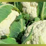 Le chou-fleur est un légume très sain, il est idéal dans le cadre d'une alimentation équilibrée mais également pour un régime amincissant, car il apporte peu de calories. Il peut se consommer cru, à la vapeur, en salades et dans beaucoup de plats différents.