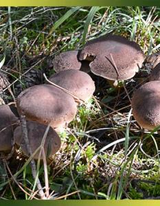 Toutes les techniques pour conserver les champignons des bois