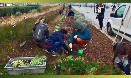 Jardiner, faire ses courses, cuisiner ensemble… l'alimentation locale crée-t-elle du lien social ?