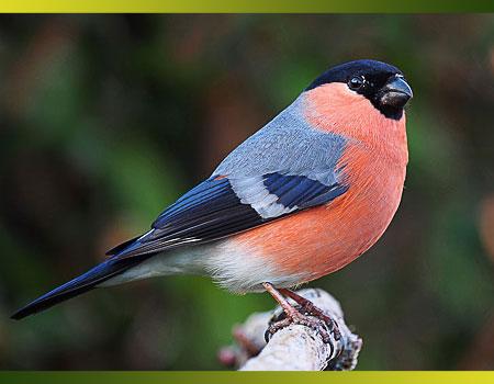 Faîtes de vos jardins un refuge pour les oiseaux