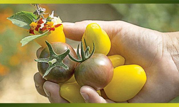 """Le """"slow gardening"""", une tendance qui consiste à faire rimer verdure, écologie et plaisir."""