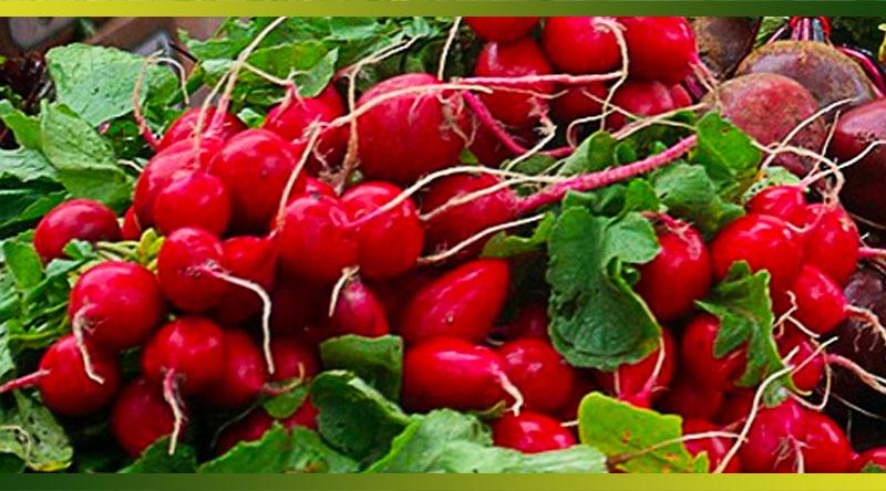 Cuisinez les feuilles de radis