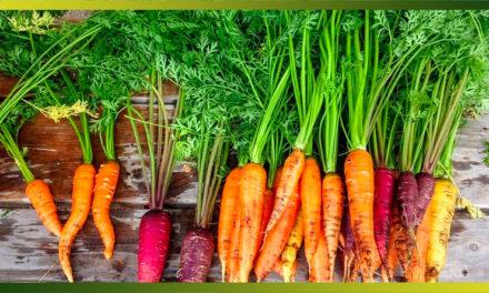 Recettes pour cuisiner les fanes de carottes