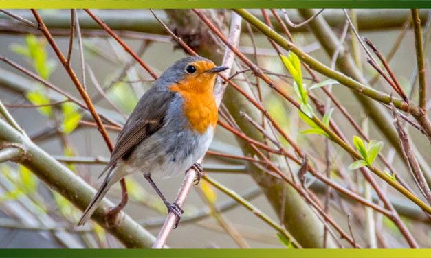 Faites de vos jardins un refuge pour les oiseaux