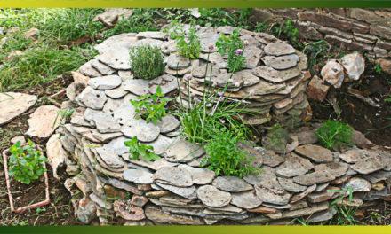 Les herbes aromatiques, tout un programme au potager !