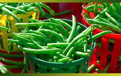 Recettes à base de haricots verts pour faire le plein de fibres tout l'été