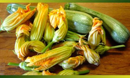 La courgette pour des recettes légères, originales et estivales