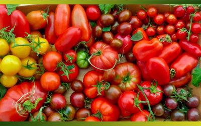 Les tomates : de savoureuses recettes pour rougir de plaisir