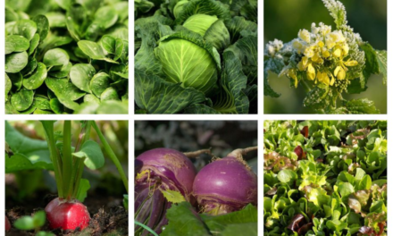 Jardinage : ce qu'il faut planter au potager en septembre, en pots ou pleine terre