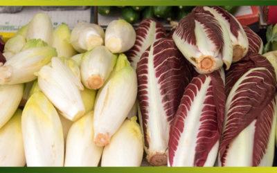 L'endive, une variété de chicorée qui se consomme aussi bien crue que cuite