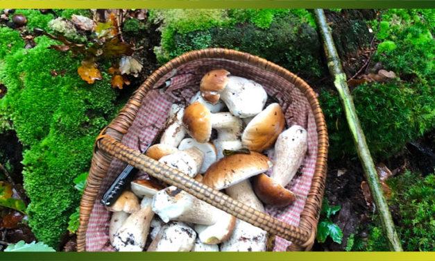 Le cèpe : ses arômes de noisette font merveille dans toutes vos recettes salées.
