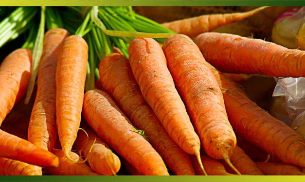 Les carottes, un des légumes les plus consommés