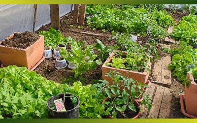 Calendrier des semis au potager et types de semis