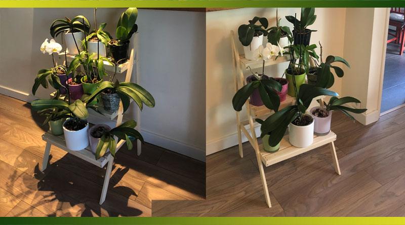 Une présentation en escabeau pour valoriser vos orchidées